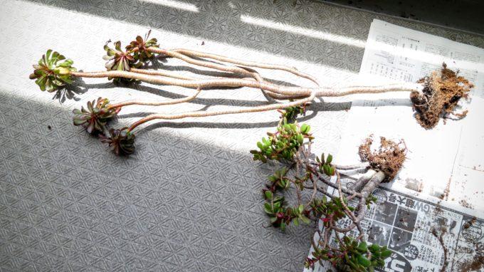 succulents (3)