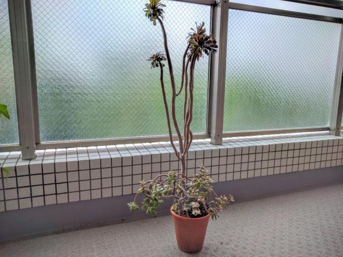 succulents (4)